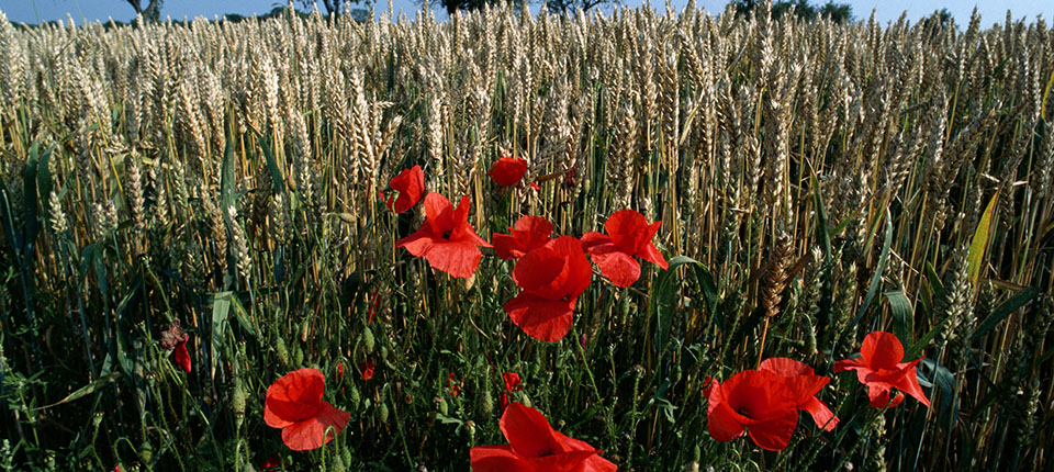 Innovazione e nuove materie prime: la sfida per l'agroalimentare italiano
