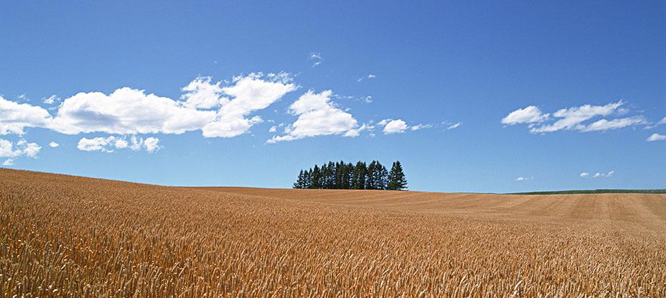Geografia della coltivazione del grano duro