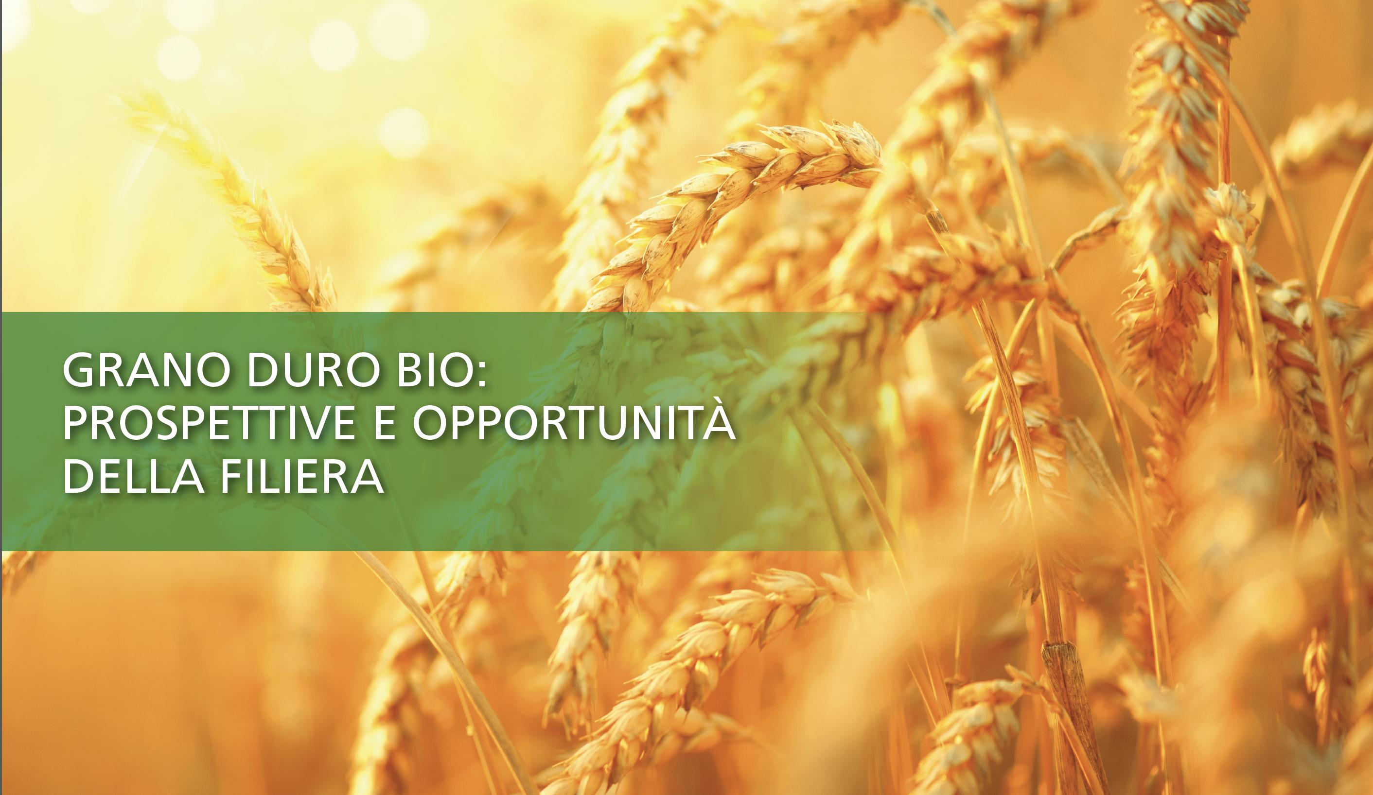 Grano duro bio: prospettive e opportunità della filiera