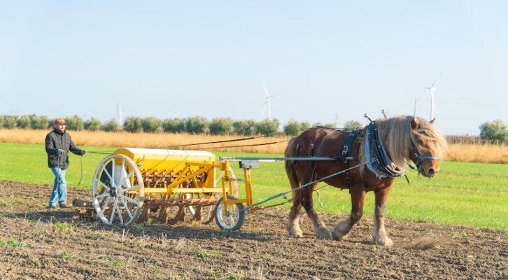 Pastificio Agricolo Dedda: dal grano alla pasta, tutto a